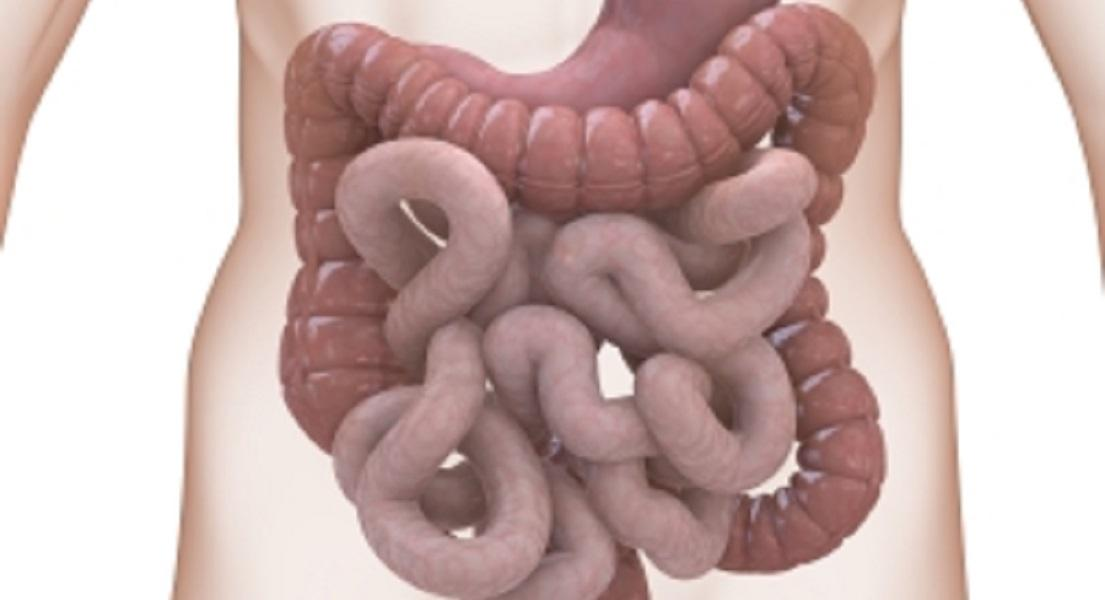 Why Gut Motility Is Such An Important Consideration In SIBO