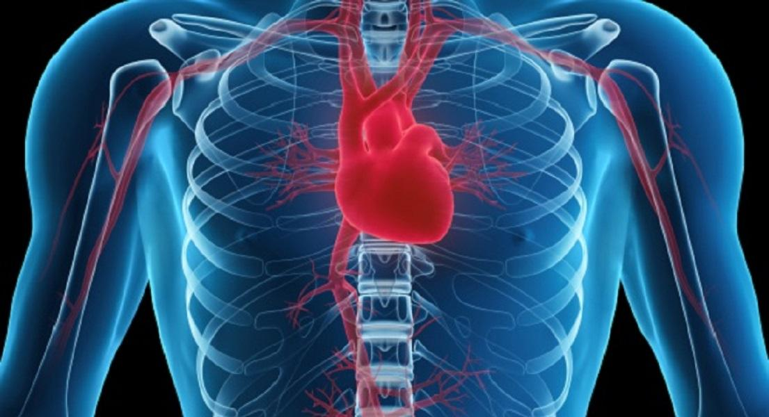 Study Shows Vitamin K is Needed for Heart Health