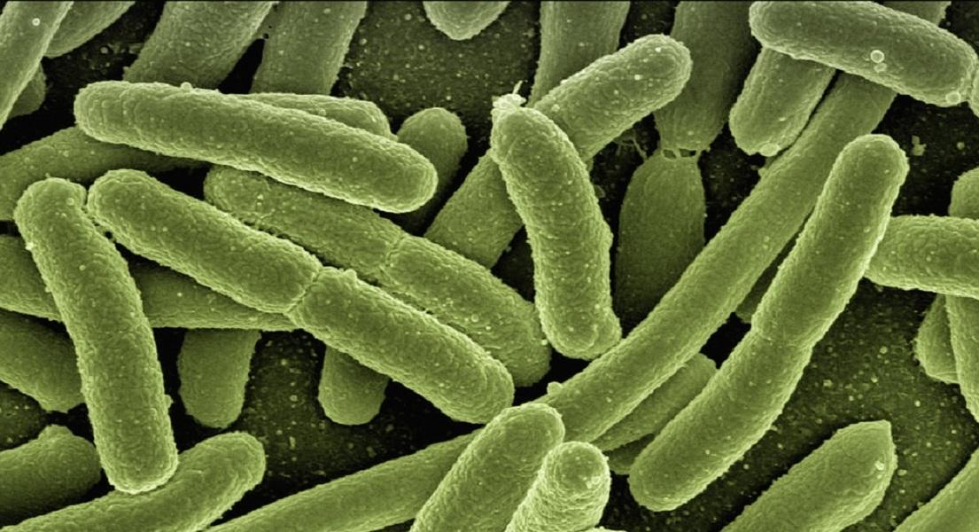 Always Consider the Gut Microbiome