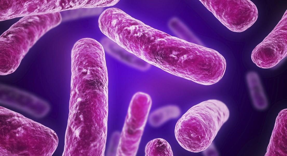 Why Are Friendly Bacteria So Important?