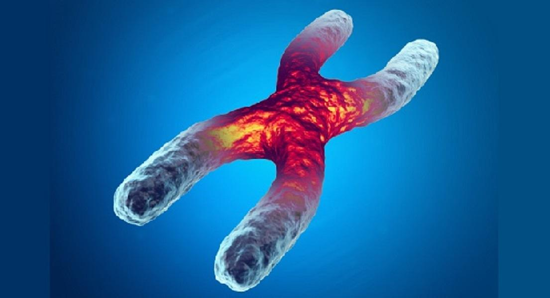 Telomeres & Supporting Healthy Ageing