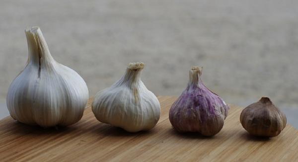 Garlic Effective for Lowering Blood Pressure